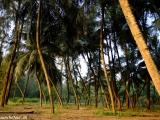 Zelená južná India je úplne iná ako severná....