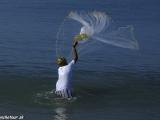 Juhoindický rybár v akcii....