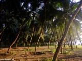 Palmový les smerom k pláži....