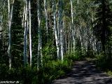 V lesíku...