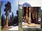 Národný park Sequoia...