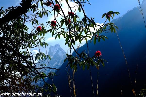 Jar v Himalájach...