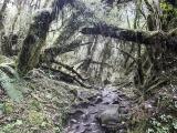 Annapurna_BC_01 (10)