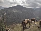 Annapurna_BC_01 (33)