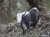 Annapurna_BC_01 (36)