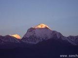 Ráno na Dhaulagiri z Poon Hillu...