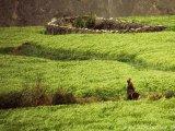 Zelené políčka v Dolnom Mustangu...