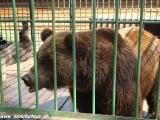 Medvedík, na šťastie len za mrežami...