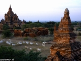 Večer medzi chrámami v Bagane...