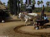 Na Barmskom vidieku...