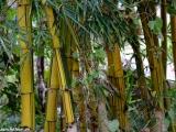 Farebný bambus..