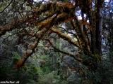 V horskom pralese III...