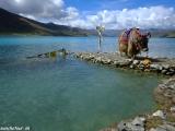 China Tibet-1126