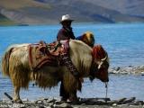 China Tibet-1143