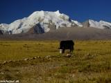 China Tibet-1862
