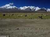 China Tibet-1876