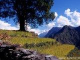 Ryžové políčka v údolí Myagdy Khola...