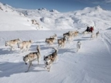 2_The-dogs-fanning-out-in-front-of-the-dog-sled-in-East-Greenland-between-Sermilik-and-Tasiilaq