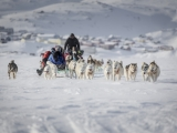 4_A-dog-sled-on-the-sea-ice-near-Tasiilaq-in-East-Greenland