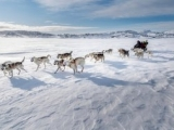 5_Drifting-snow-and-a-dog-sled-on-the-sea-ice-near-Tasiilaq-in-East-Greenland