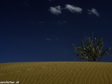 Piesok, piesok a piesok a niekedy aj strom...