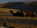 Večer na púšti...