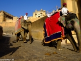 Slony pred bránami...