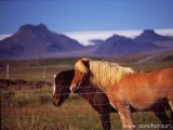 Pohľad do tajuplného vnútrozemia Islandu...
