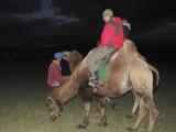 V púšti Gobi...