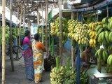 Tamilnádu / Madurai až 200 druhov banánov na jednom mieste...