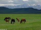 Kazachstan_Kirgistan-1132