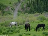 Kazachstan_Kirgistan-822