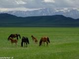 Kazachstan_Kirgistan-1270