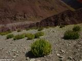 Ladakh-611