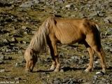 Ladakh-779