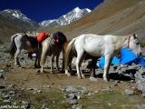 Ladakh-884