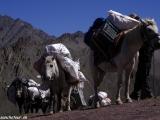 Ladakh-654