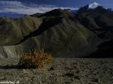 Ladakh-895