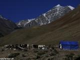 Ladakh-974