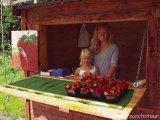 Dievčatká nám predávajú jahody...