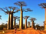 Alee de Baobab je len jedna...