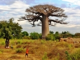 domov pod baobabom