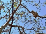 lemur kata,NP Isalo