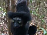 Madagaskar_01-25