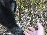 Madagaskar_01-9