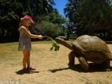 V zoologickej záhrade La Vanille Crocodile Park...