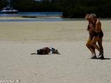 Samba na pláži...