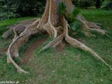 V botanickej záhrade v Pamplemousses...