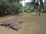 La Vanille Crocodile Park...