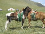Kôň, najbežnejší dopravný prostriedok...